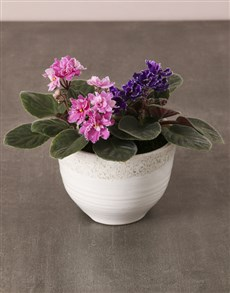 plants: African Violets In White Ceramic Pot!