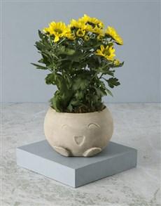 plants: Chrysanthemum in Smiley Pot!