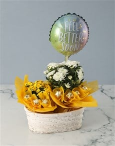 plants: Cheerful Chrysanthemums Basket!