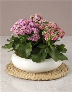 flowers: Pink Kalanchoe In Large Bowl!