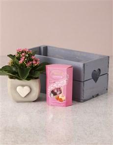 flowers: Heartfelt Kalanchoe Hamper!