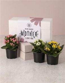 flowers: Best Mom Kalanchoe Box!