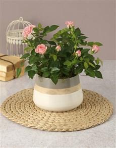 plants: Enchanted Rose Bush!