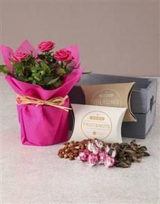 flowers: Rose Bush Hamper Of Delights!