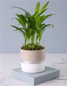 plants: Lustrous Love Palm!