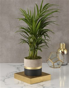 plants: Lively Leaves Love Palm!