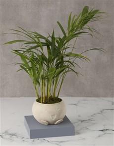 plants: Happy Go Lucky Love Palm!