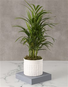 plants: Classy And Classic Love Palm!