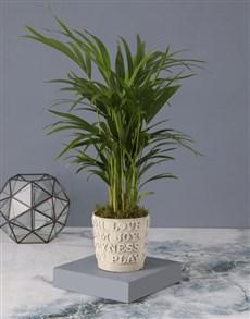 plants: Kind Words Love Palm Planter!