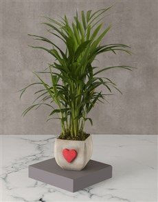 plants: Hearts Love Palm Planter!