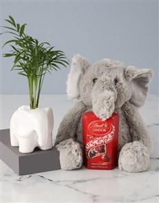 flowers: Elephants Love Plant Hamper!