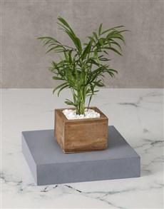 flowers: Love Palm Wooden Planter!