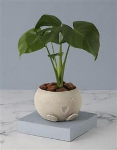 plants: Monsteria In Mojo Pot!