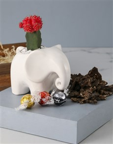 flowers: Wild And Wonderful Cactus Pot Plant!