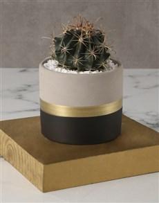 plants: Snazzy Ball Cactus Pot Plant !