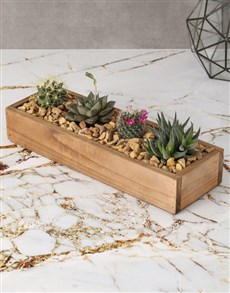 plants: Family of Succulents!