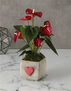 flowers: Red Anthurium In Heart Pot!