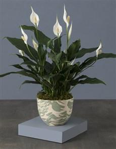 plants: Artsy Spathiphyllum Pot Plant!