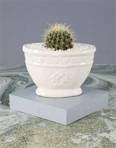 plants: Adorable Cactus Ball Pot Plant!