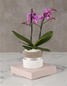plants: Orchid In Silver Striped Pot!