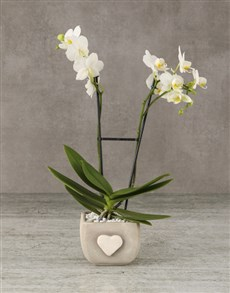 flowers: Whimsical White Orchids!