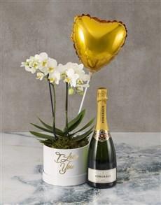 plants: Orchids Of Joy Bubbly Hat Box!
