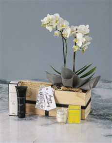 flowers: Luxurious White Orchid Wonder!