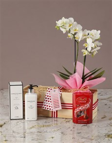 flowers: Sweet and Serene White Orchid!