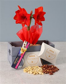 gifts: Red Amaryllis Nougat Hamper in Heart Crate!