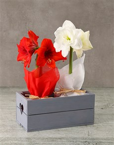 gifts: Mixed Amaryllis in Wooden Heart Crate!