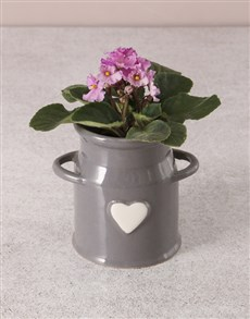 plants: African Violet In Milk Can!