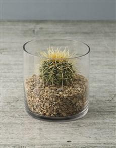 plants: Prickly Ball Cactus!
