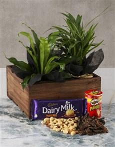 flowers: Asplenium Snack Love Crate!