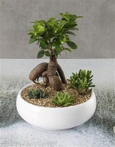 plants: Rock Garden Bonsai Bowl!