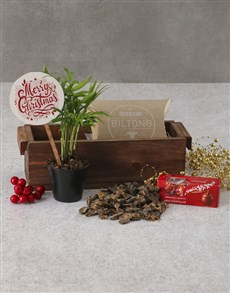 plants: Sweet And Savoury Christmas Palm Tree!