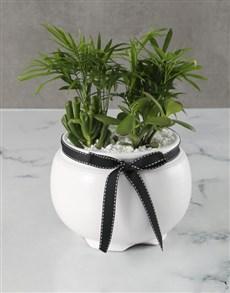 plants: Succulent Love Palm Pot!