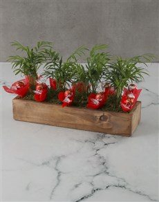 plants: Lovely Lindt And Love Palm Crate!