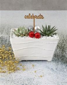 gifts: Celebratory Succulent In Ceramic Pot!