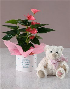flowers: Loved By All Anthurium And Teddy Hatbox!