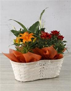 flowers: Zesty Asiatic Lily Basket!