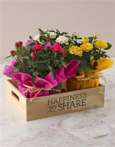 flowers: Happiness to Share Trio!