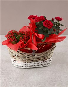 flowers: Rose Bush in a Wooden Basket!