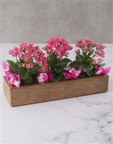 flowers: Kalanchoe Flowers In A Wooden Crate!