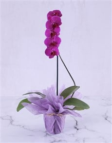 gifts: Perfectly Pink And Purple Orchid!