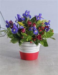 flowers: Iris Mix in Red Stripe Pot!