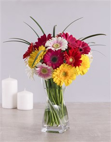 gifts: Mixed Gerbera Daisies in a Clear Vase!