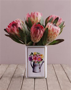 gifts: Proteas in a Printed Tin!