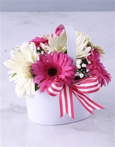 flowers: Vanilla Variety Gerbera Array!