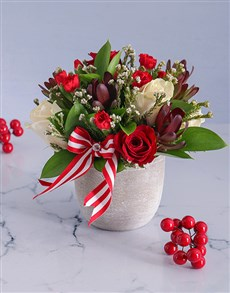 flowers: Cream and Red Rose Potted Delight!