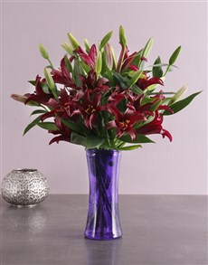 flowers: Purple Flair Lily Blossoms!